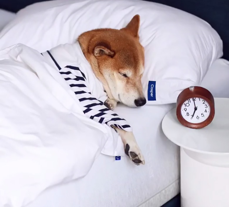 Optimize Your Pet's Sleep Environment at Casper
