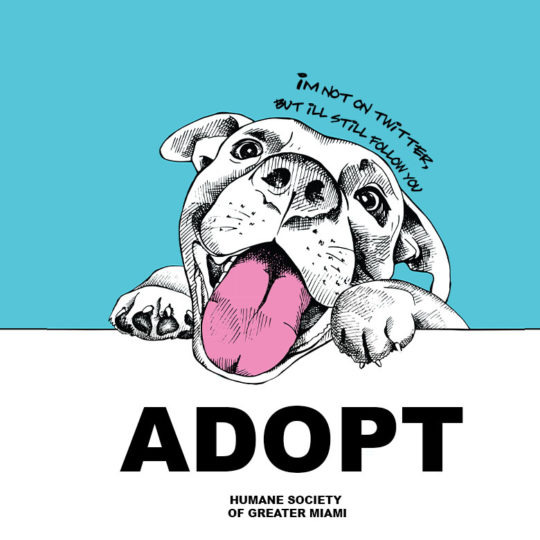 Find Fido a Forever Home